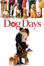 dog days - DVD