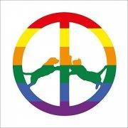 hype williams - rainbow edition - Vinyl / LP